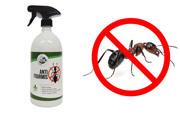 Repulsif fourmi