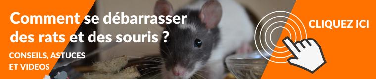 Comment se débarrasser des souris et des rats ?