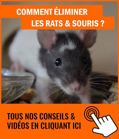comment éliminer les souris ?