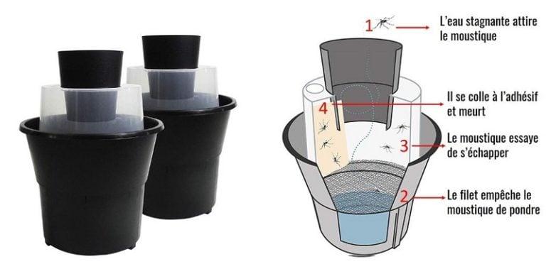 comment eliminer les larves de moustique