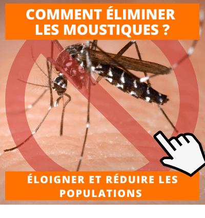 Eliminer les moustiques astuces et conseils